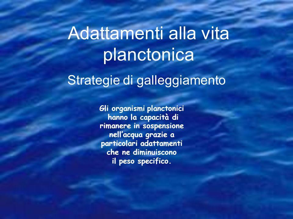Adattamenti alla vita planctonica Strategie di galleggiamento Gli organismi planctonici hanno la capacità di rimanere in sospensione nellacqua grazie