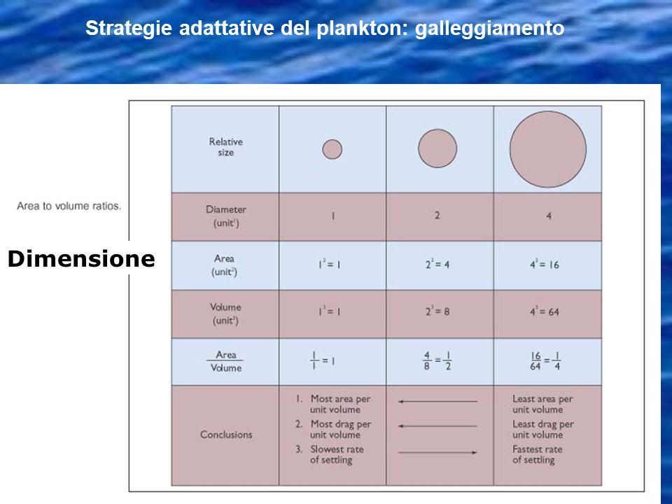 Strategie adattative del plankton: galleggiamento Dimensione