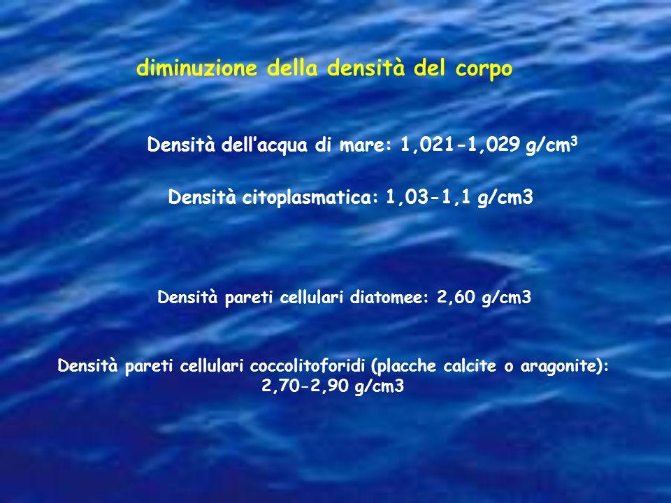 diminuzione della densità del corpo Densità dellacqua di mare: 1,021-1,029 g/cm 3 Densità citoplasmatica: 1,03-1,1 g/cm3 Densità pareti cellulari cocc