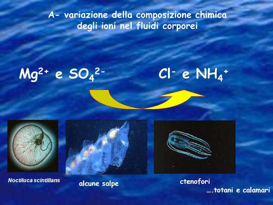 A- variazione della composizione chimica degli ioni nel fluidi corporei Mg 2+ e SO 4 2- Cl - e NH 4 + Noctiluca scintillans alcune salpe ctenofori ….t