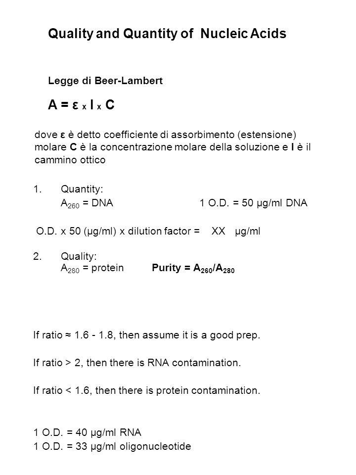 Quality and Quantity of Nucleic Acids Legge di Beer-Lambert A = ε x l x C 1.Quantity: A 260 = DNA1 O.D. = 50 μg/ml DNA O.D. x 50 (μg/ml) x dilution fa
