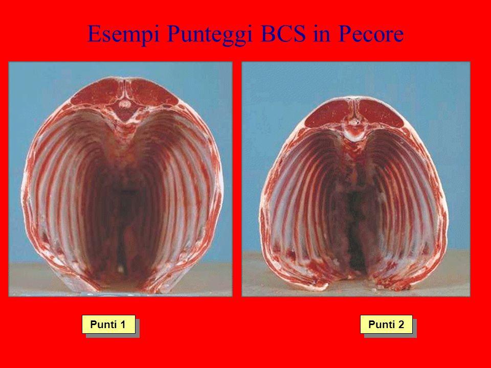 Esempi Punteggi BCS in Pecore Punti 1 Punti 2