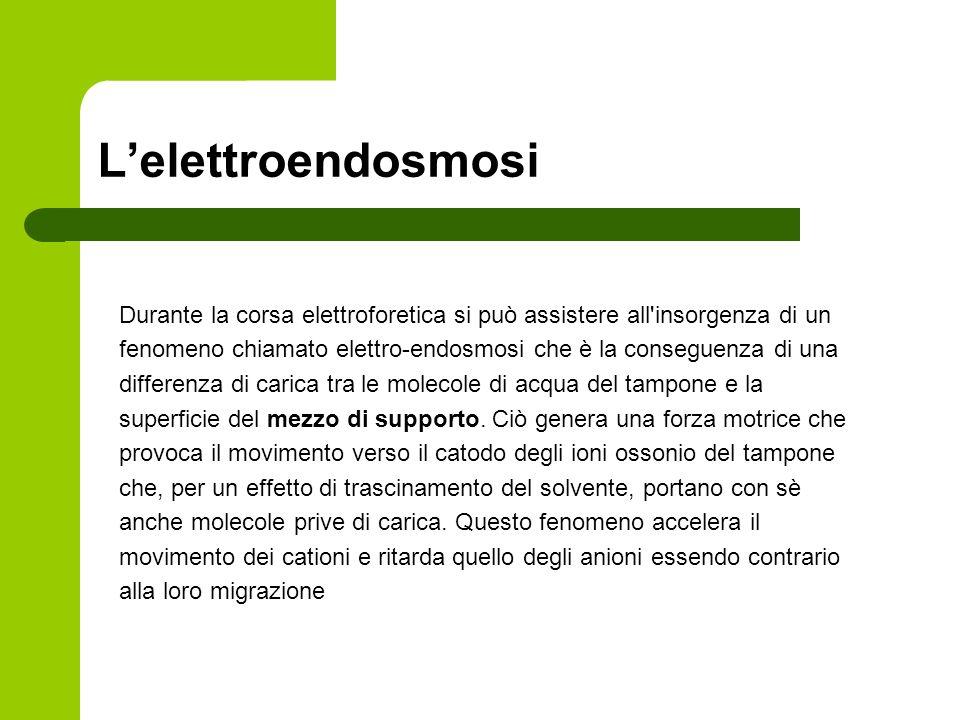 Lelettroendosmosi Durante la corsa elettroforetica si può assistere all'insorgenza di un fenomeno chiamato elettro-endosmosi che è la conseguenza di u
