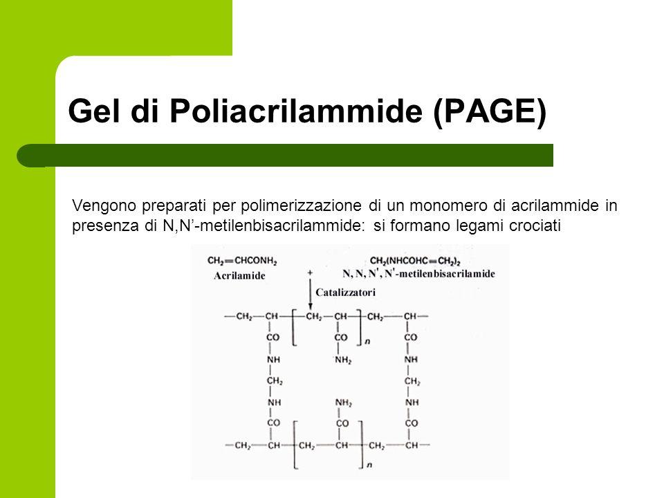 Gel di Poliacrilammide (PAGE) Vengono preparati per polimerizzazione di un monomero di acrilammide in presenza di N,N-metilenbisacrilammide: si forman