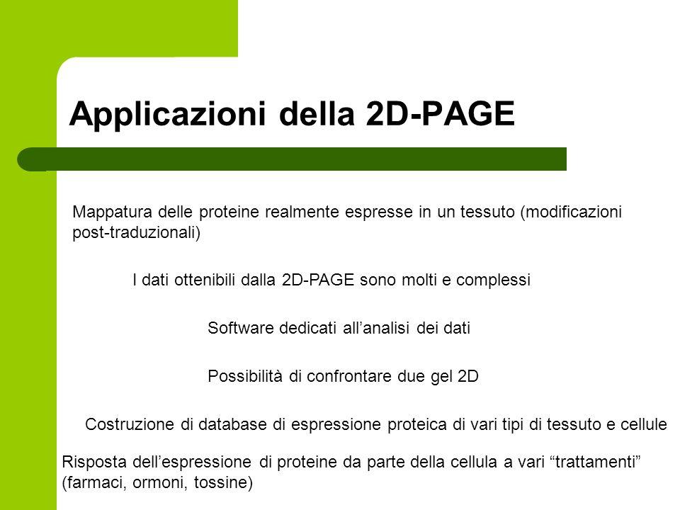 Applicazioni della 2D-PAGE Mappatura delle proteine realmente espresse in un tessuto (modificazioni post-traduzionali) I dati ottenibili dalla 2D-PAGE