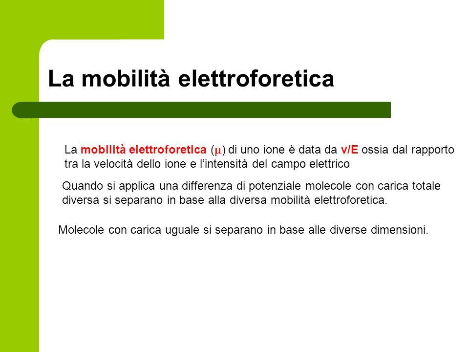 La mobilità elettroforetica La mobilità elettroforetica ( ) di uno ione è data da v/E ossia dal rapporto tra la velocità dello ione e lintensità del c