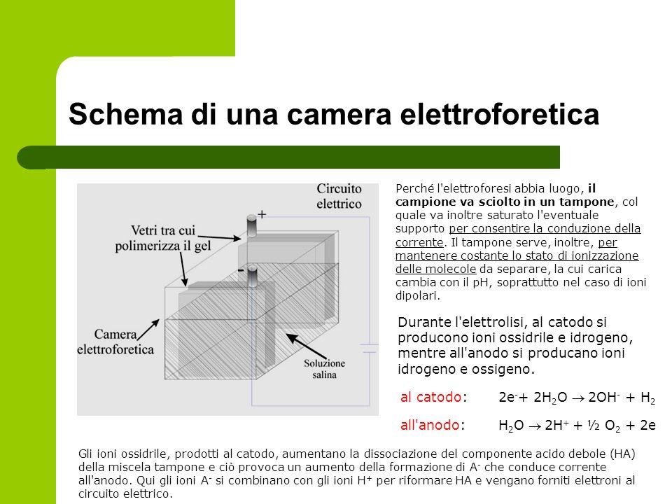 Schema di una camera elettroforetica Perché l'elettroforesi abbia luogo, il campione va sciolto in un tampone, col quale va inoltre saturato l'eventua