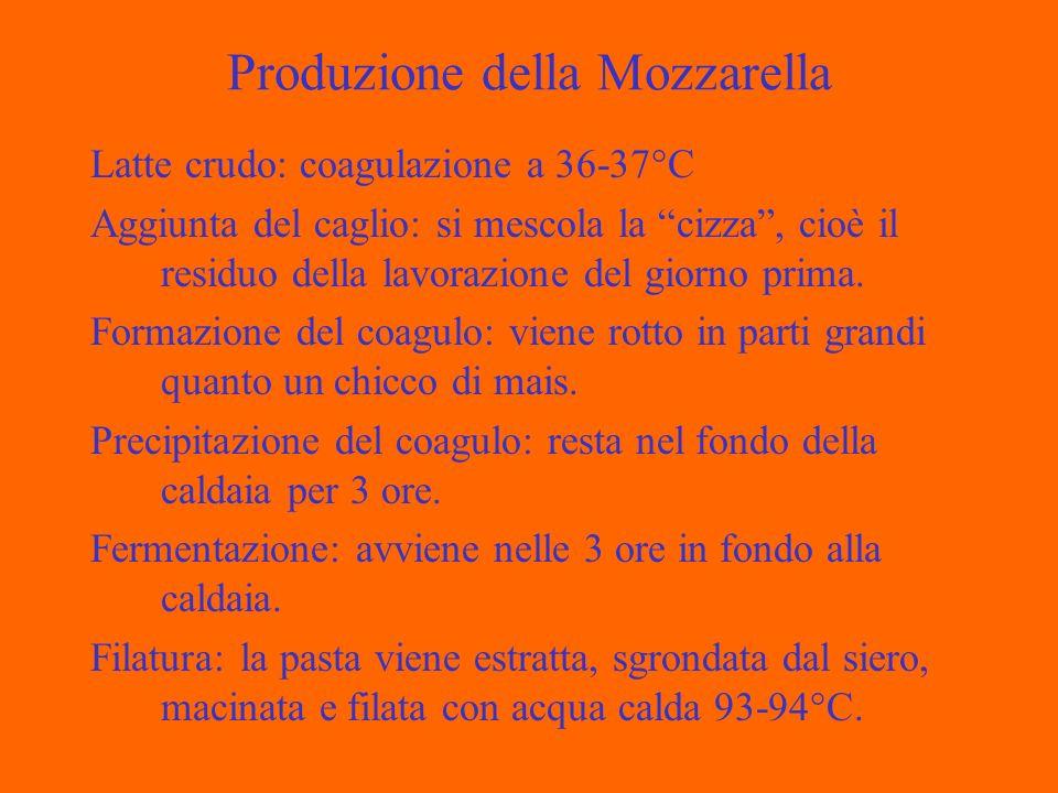 Produzione della Mozzarella Latte crudo: coagulazione a 36-37°C Aggiunta del caglio: si mescola la cizza, cioè il residuo della lavorazione del giorno prima.