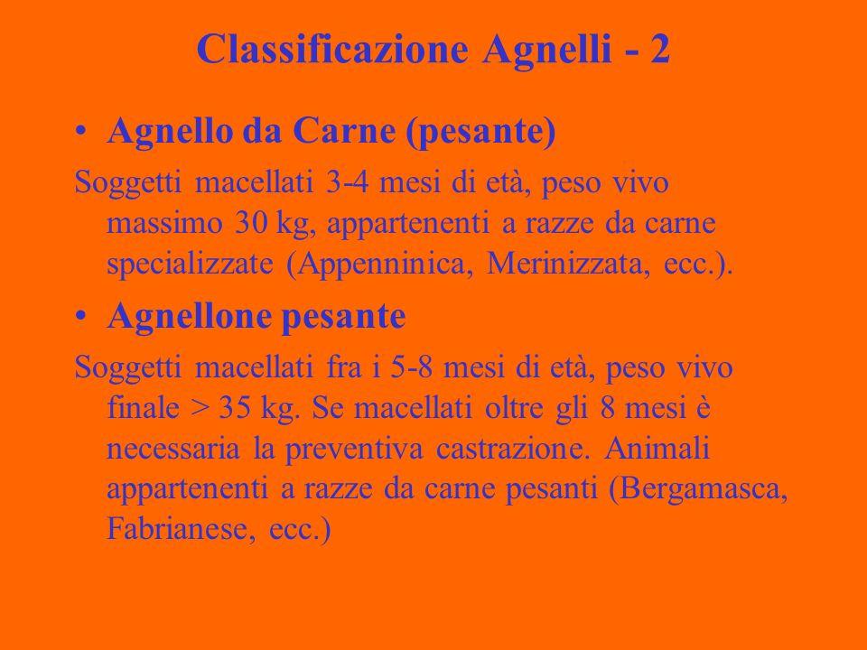 Classificazione Agnelli - 2 Agnello da Carne (pesante) Soggetti macellati 3-4 mesi di età, peso vivo massimo 30 kg, appartenenti a razze da carne specializzate (Appenninica, Merinizzata, ecc.).