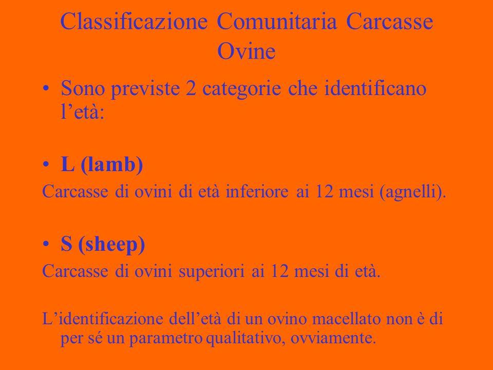 Classificazione Comunitaria Carcasse Ovine Sono previste 2 categorie che identificano letà: L (lamb) Carcasse di ovini di età inferiore ai 12 mesi (agnelli).