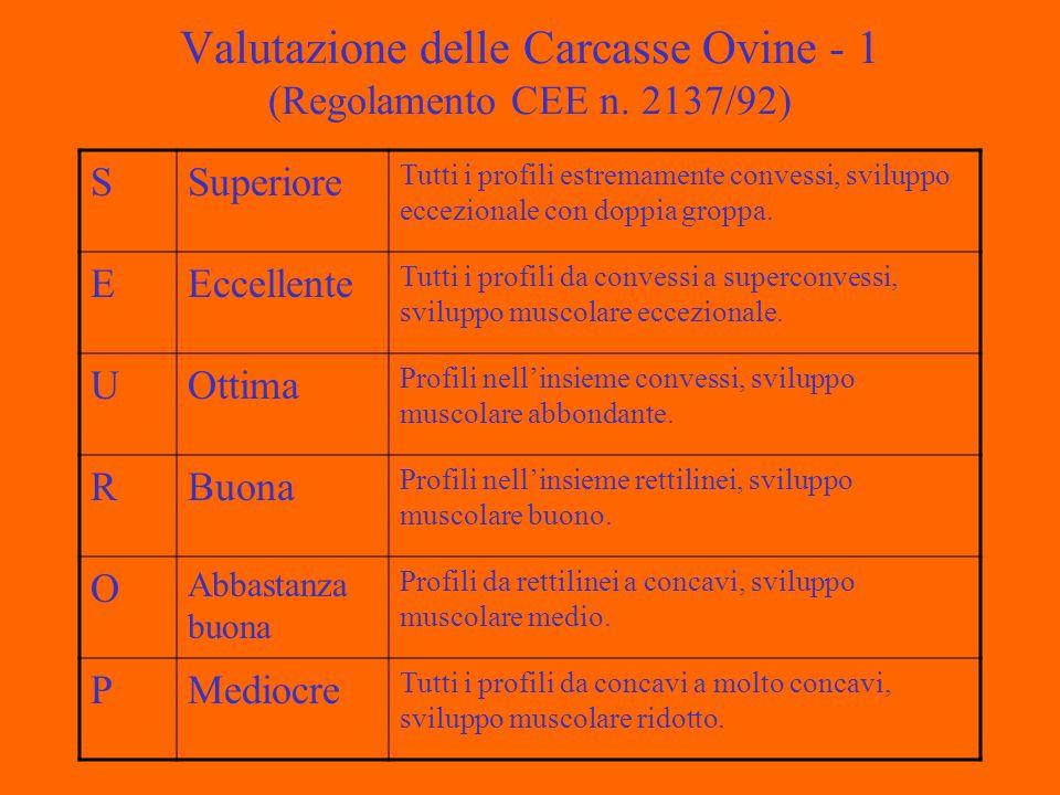 Valutazione delle Carcasse Ovine - 1 (Regolamento CEE n.