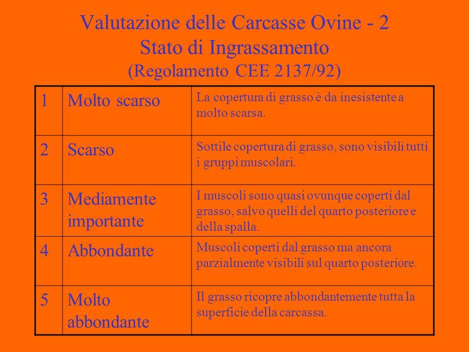 Valutazione delle Carcasse Ovine - 2 Stato di Ingrassamento (Regolamento CEE 2137/92) 1Molto scarso La copertura di grasso è da inesistente a molto scarsa.