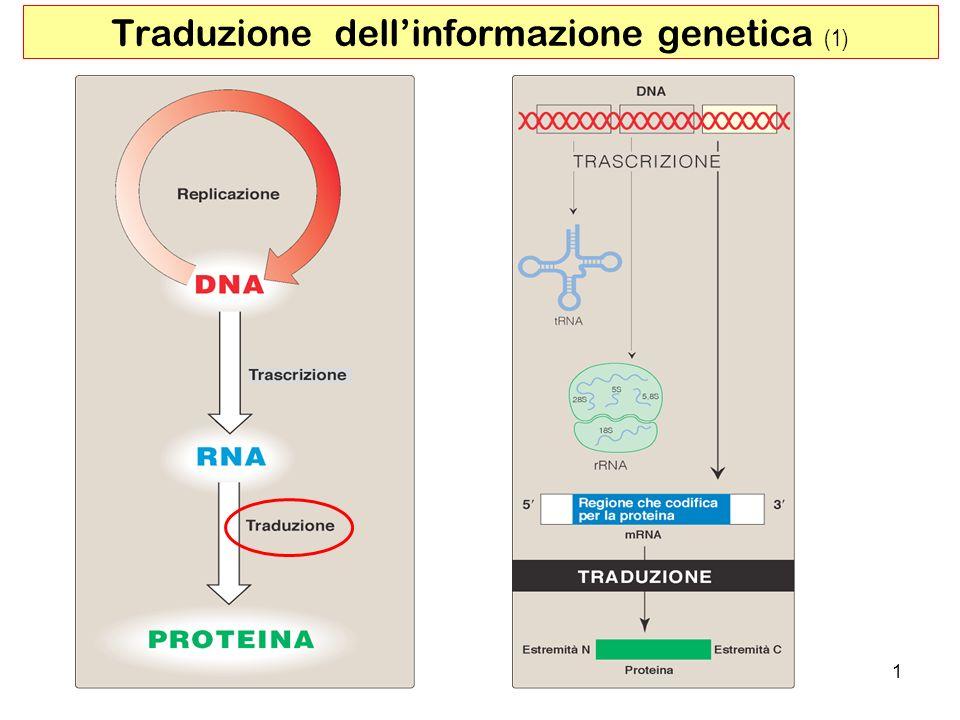 2 Traduzione dellinformazione genetica (2) Il processo negli eucarioti richiede: 70 diverse proteine ribosomiali >20 enzimi che attivano i precursori degli amminoacidi >12 enzimi ausiliari e altri fattori proteici per inizio, allungamento e terminazione circa 100 enzimi per le modifiche post- traduzionali >40t ipi di tRNA e rRNA Nonostante la complessità il processo è veloce Il processo può utilizzare fino al 90% dellenergia chimica necessaria alla cellula per tutte le reazioni biosintetiche