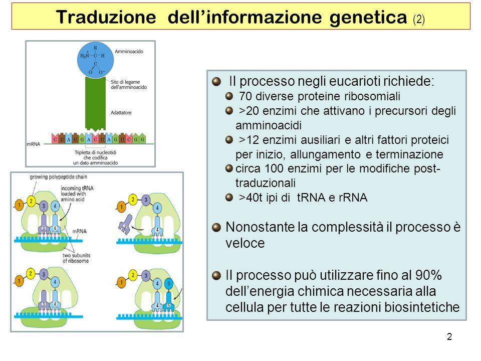 2 Traduzione dellinformazione genetica (2) Il processo negli eucarioti richiede: 70 diverse proteine ribosomiali >20 enzimi che attivano i precursori