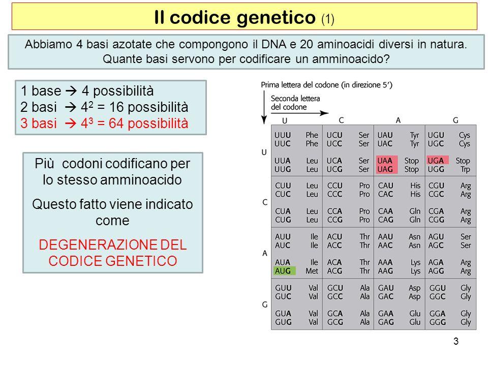 Abbiamo 4 basi azotate che compongono il DNA e 20 aminoacidi diversi in natura. Quante basi servono per codificare un amminoacido? Il codice genetico