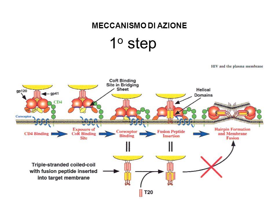 1 o step MECCANISMO DI AZIONE