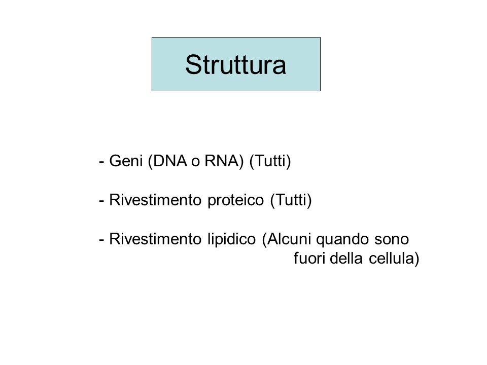 Struttura - Geni (DNA o RNA) (Tutti) - Rivestimento proteico (Tutti) - Rivestimento lipidico (Alcuni quando sono fuori della cellula)