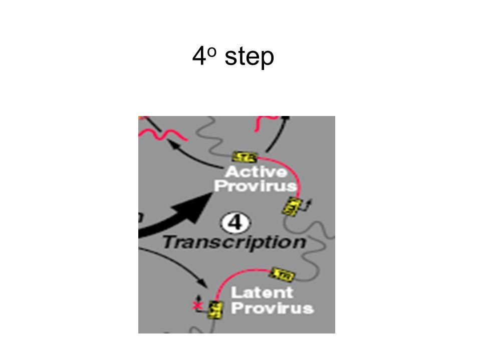 4 o step