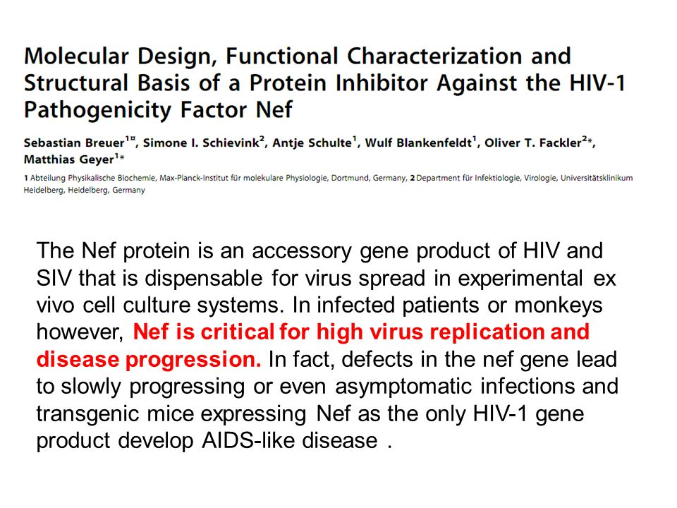 The Nef protein is an accessory gene product of HIV and SIV that is dispensable for virus spread in experimental ex vivo cell culture systems.