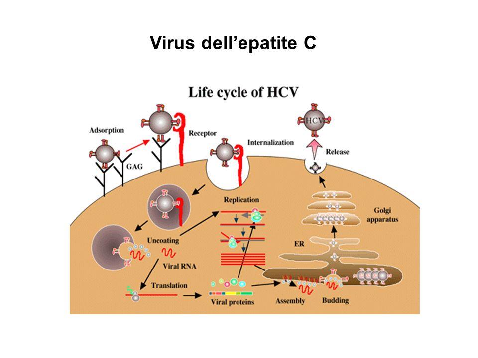 Virus dellepatite C
