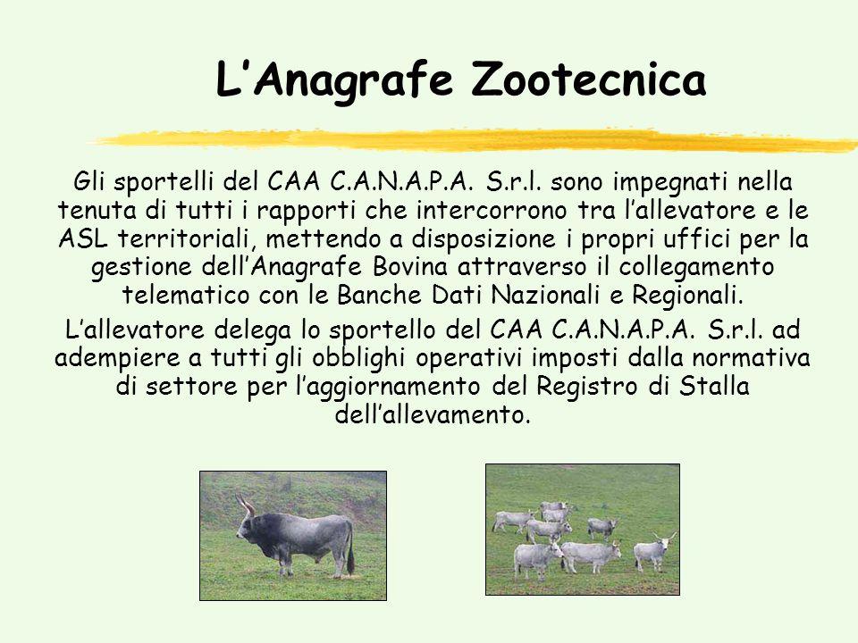 PAC Zootecnia Premio Bovini Maschi e Vacche Nutrici, Premio alla Macellazione e Premio Ovicaprini.
