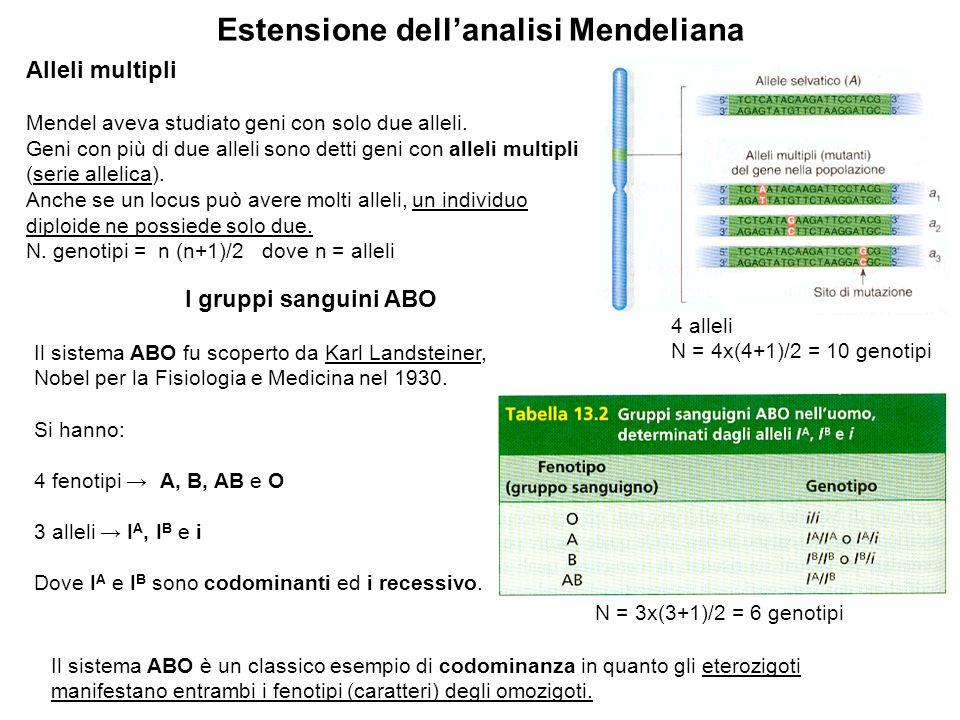 Estensione dellanalisi Mendeliana Alleli multipli Mendel aveva studiato geni con solo due alleli. Geni con più di due alleli sono detti geni con allel