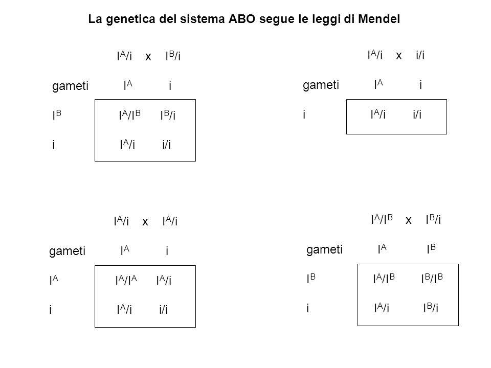 La genetica del sistema ABO segue le leggi di Mendel I A /i x I B /i gameti I A i I B I A /I B I B /i i I A /i i/i I A /i x I A /i gameti I A i I A I A /I A I A /i i I A /i i/i I A /i x i/i gameti I A i i I A /i i/i I A /I B x I B /i gameti I A I B I B I A /I B I B /I B i I A /i I B /i