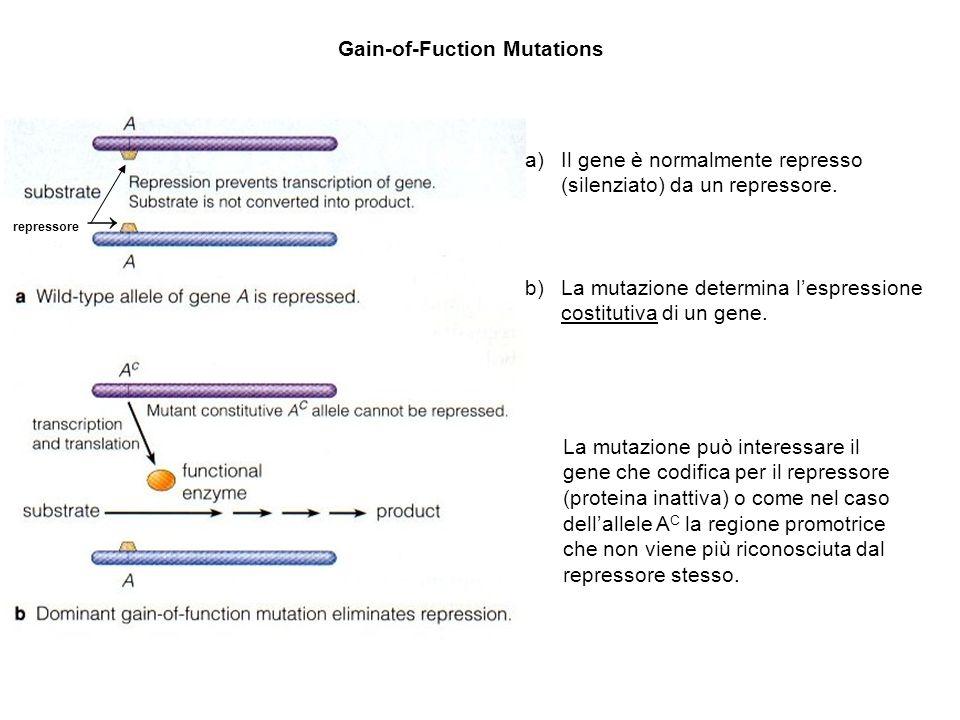 Gain-of-Fuction Mutations a)Il gene è normalmente represso (silenziato) da un repressore. b)La mutazione determina lespressione costitutiva di un gene