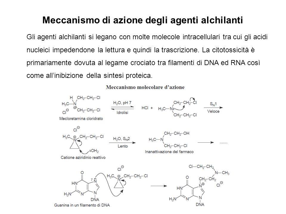 Meccanismo di azione degli agenti alchilanti Gli agenti alchilanti si legano con molte molecole intracellulari tra cui gli acidi nucleici impedendone