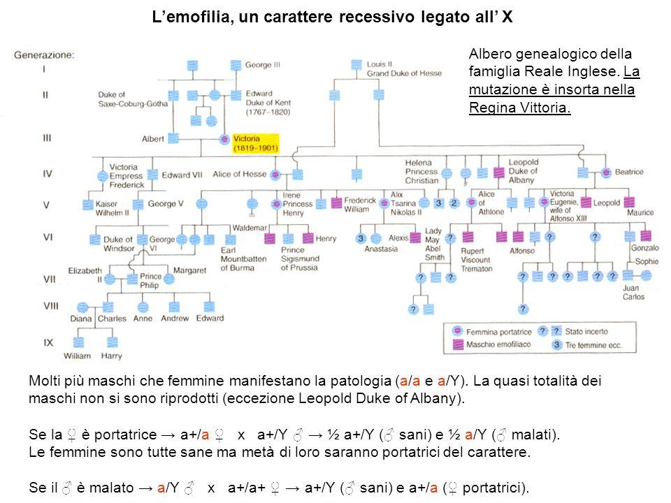 Lemofilia, un carattere recessivo legato all X Molti più maschi che femmine manifestano la patologia (a/a e a/Y). La quasi totalità dei maschi non si