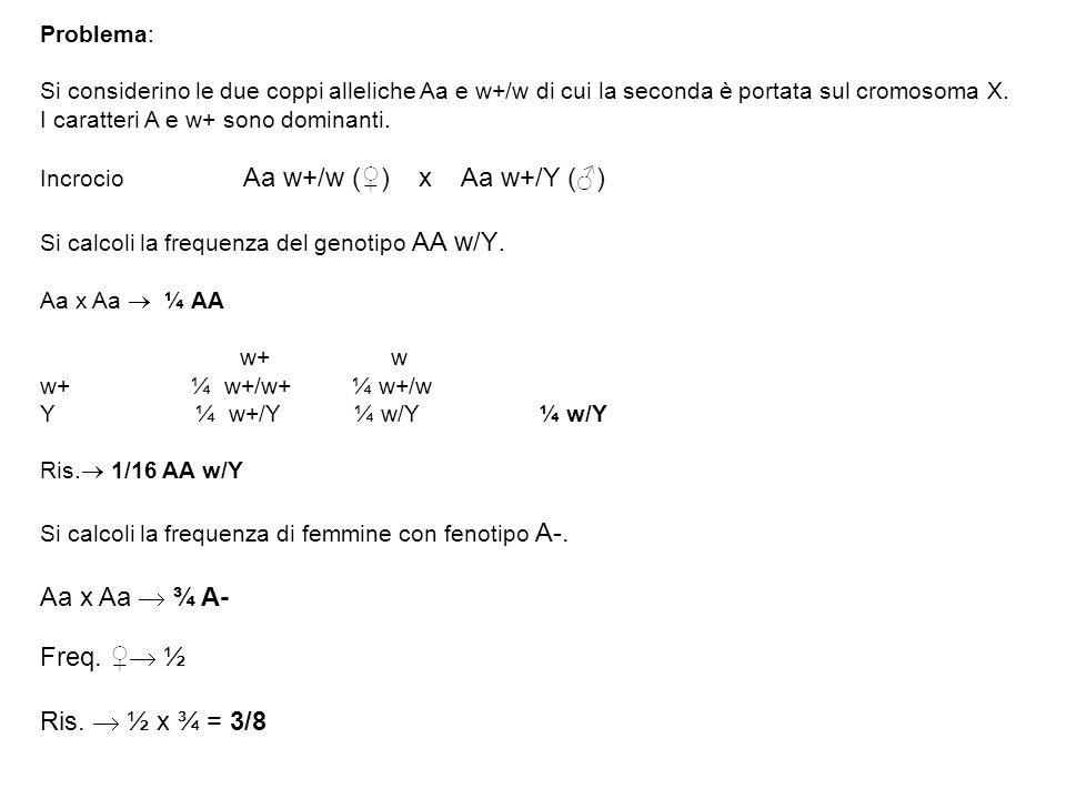 Problema: Si considerino le due coppi alleliche Aa e w+/w di cui la seconda è portata sul cromosoma X. I caratteri A e w+ sono dominanti. Incrocio Aa