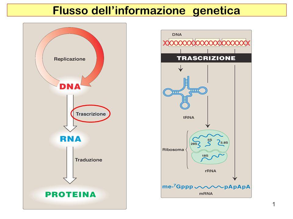 1 Flusso dellinformazione genetica