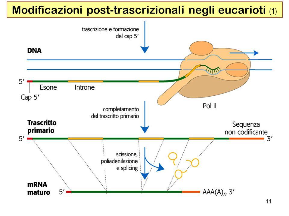 11 Modificazioni post-trascrizionali negli eucarioti (1)