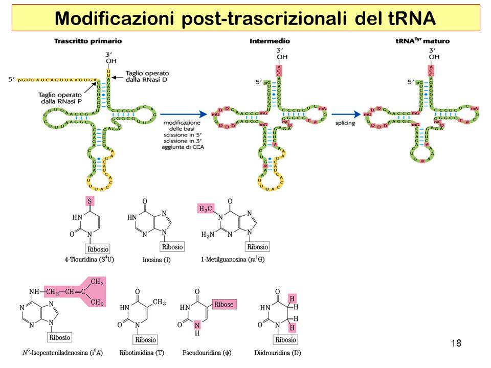 18 Modificazioni post-trascrizionali del tRNA