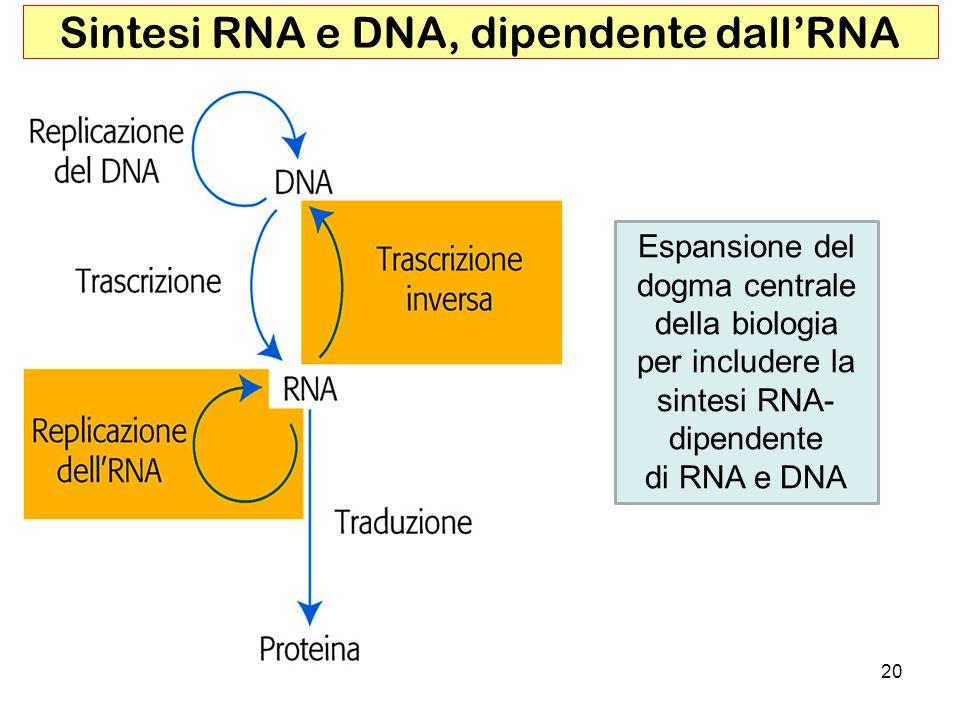 20 Sintesi RNA e DNA, dipendente dallRNA Espansione del dogma centrale della biologia per includere la sintesi RNA- dipendente di RNA e DNA