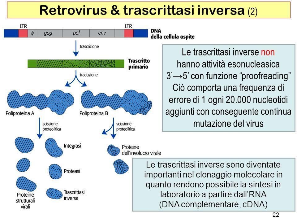 Le trascrittasi inverse sono diventate importanti nel clonaggio molecolare in quanto rendono possibile la sintesi in laboratorio a partire dallRNA (DN