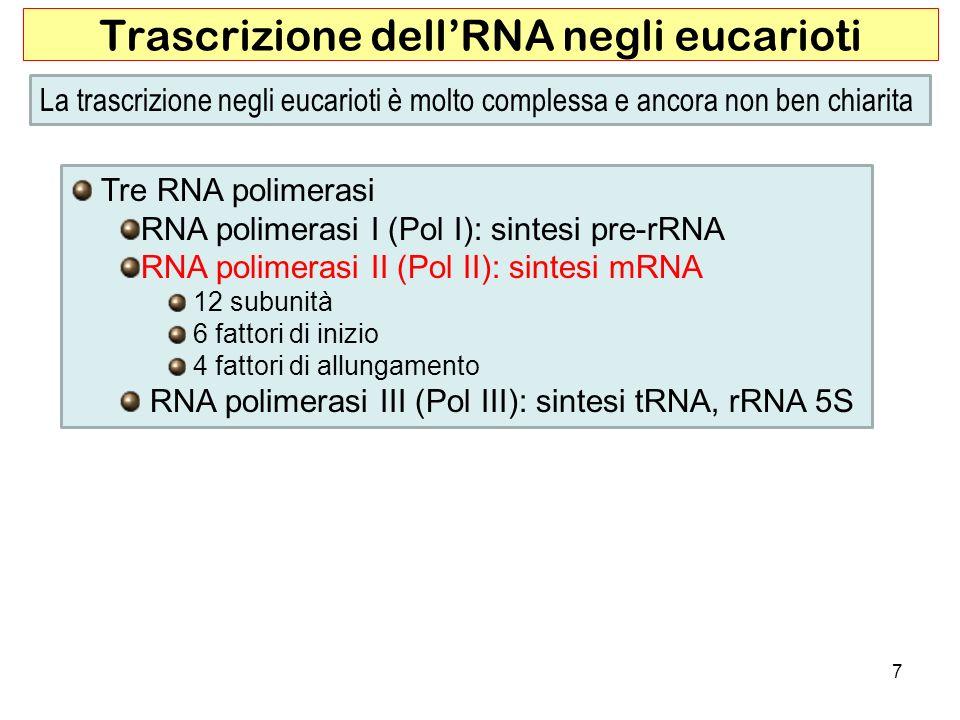 7 Trascrizione dellRNA negli eucarioti La trascrizione negli eucarioti è molto complessa e ancora non ben chiarita Tre RNA polimerasi RNA polimerasi I