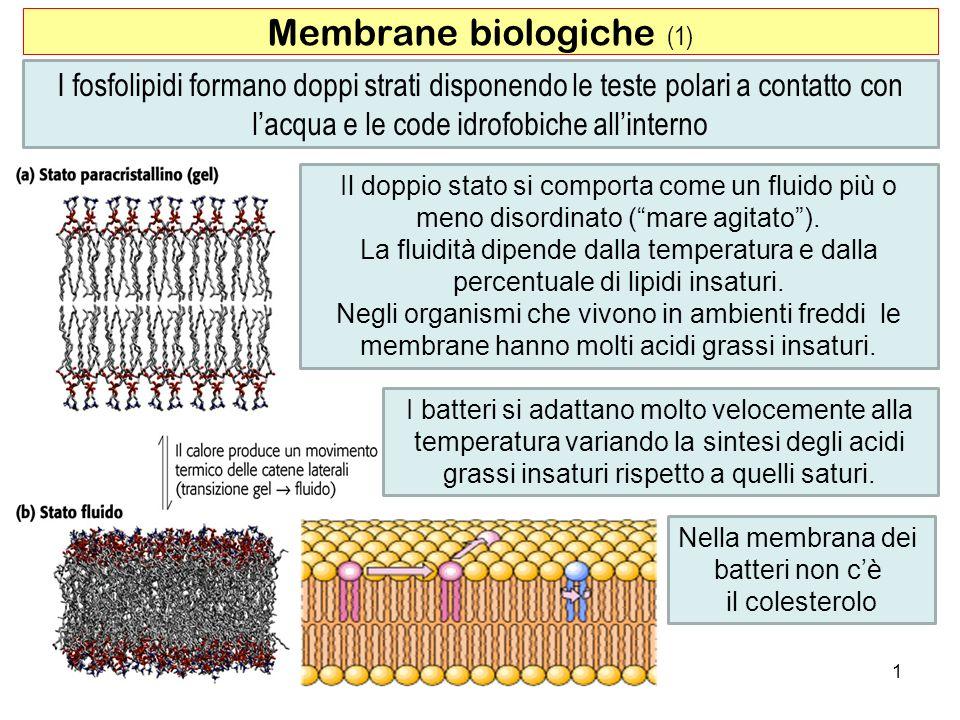 I fosfolipidi formano doppi strati disponendo le teste polari a contatto con lacqua e le code idrofobiche allinterno Membrane biologiche (1) 1 Il dopp