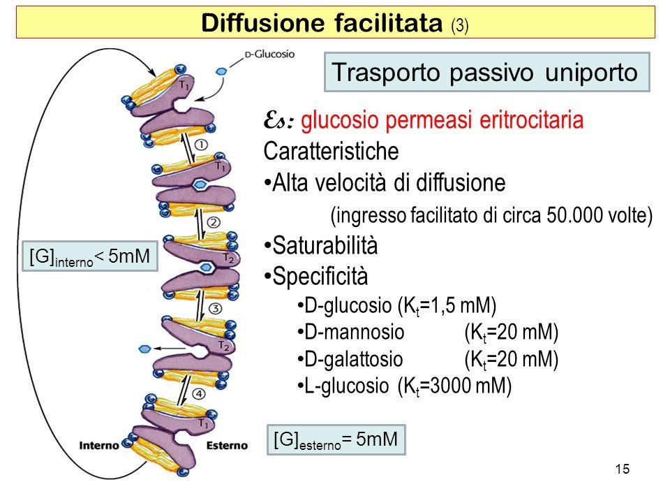 Diffusione facilitata (3) Es: glucosio permeasi eritrocitaria Caratteristiche Alta velocità di diffusione (ingresso facilitato di circa 50.000 volte)