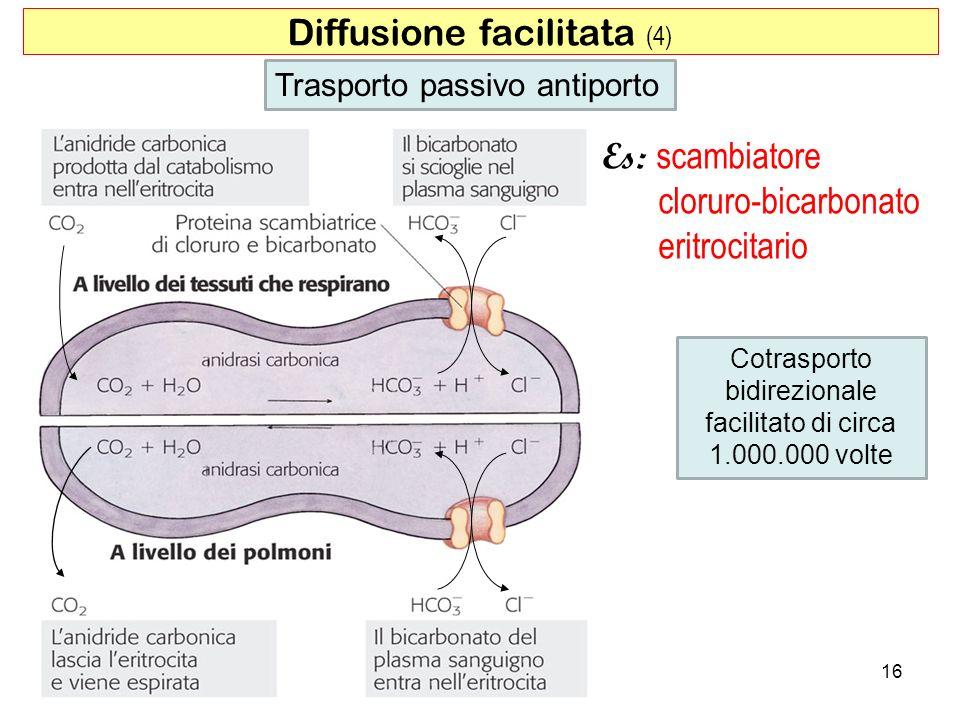 Diffusione facilitata (4) Cotrasporto bidirezionale facilitato di circa 1.000.000 volte Trasporto passivo antiporto Es: scambiatore cloruro-bicarbonat
