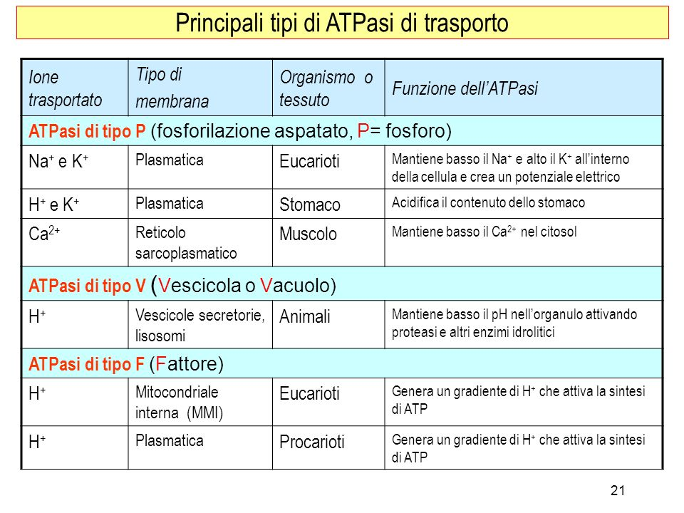 Ione trasportato Tipo di membrana Organismo o tessuto Funzione dellATPasi ATPasi di tipo P (fosforilazione aspatato, P= fosforo) Na + e K + Plasmatica