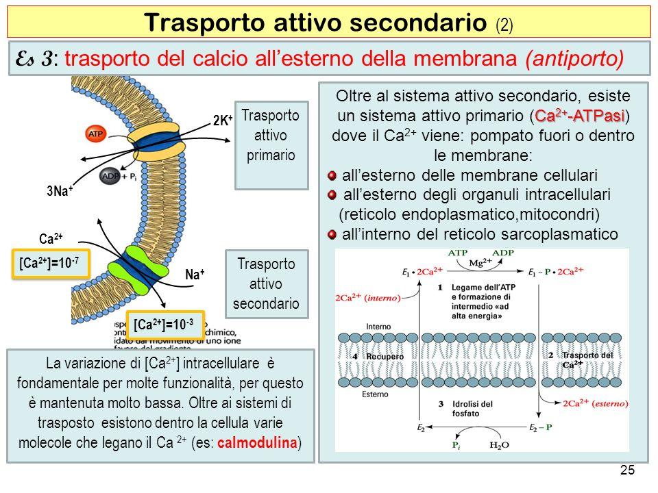 25 Trasporto attivo secondario (2) Na + 2K + Ca 2+ 3Na + [Ca 2+ ]=10 -7 Trasporto attivo primario Trasporto attivo secondario [Ca 2+ ]=10 -3 Es 3 : tr