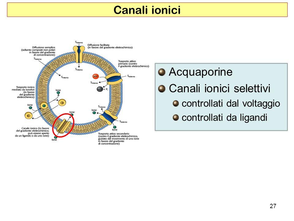 Acquaporine Canali ionici selettivi controllati dal voltaggio controllati da ligandi Canali ionici 27