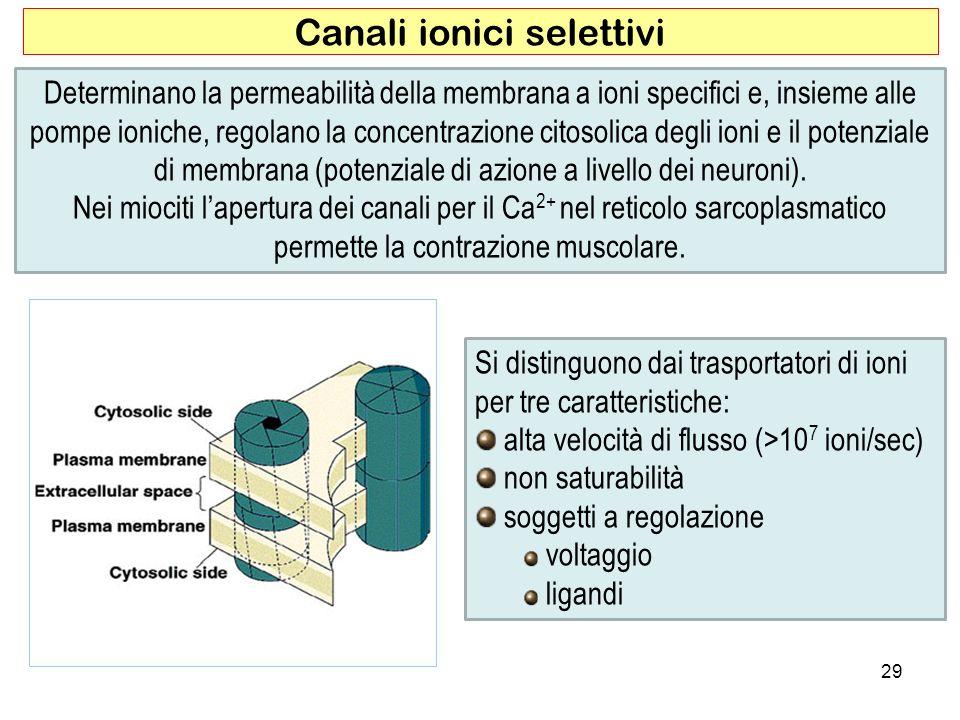 29 Canali ionici selettivi Determinano la permeabilità della membrana a ioni specifici e, insieme alle pompe ioniche, regolano la concentrazione citos