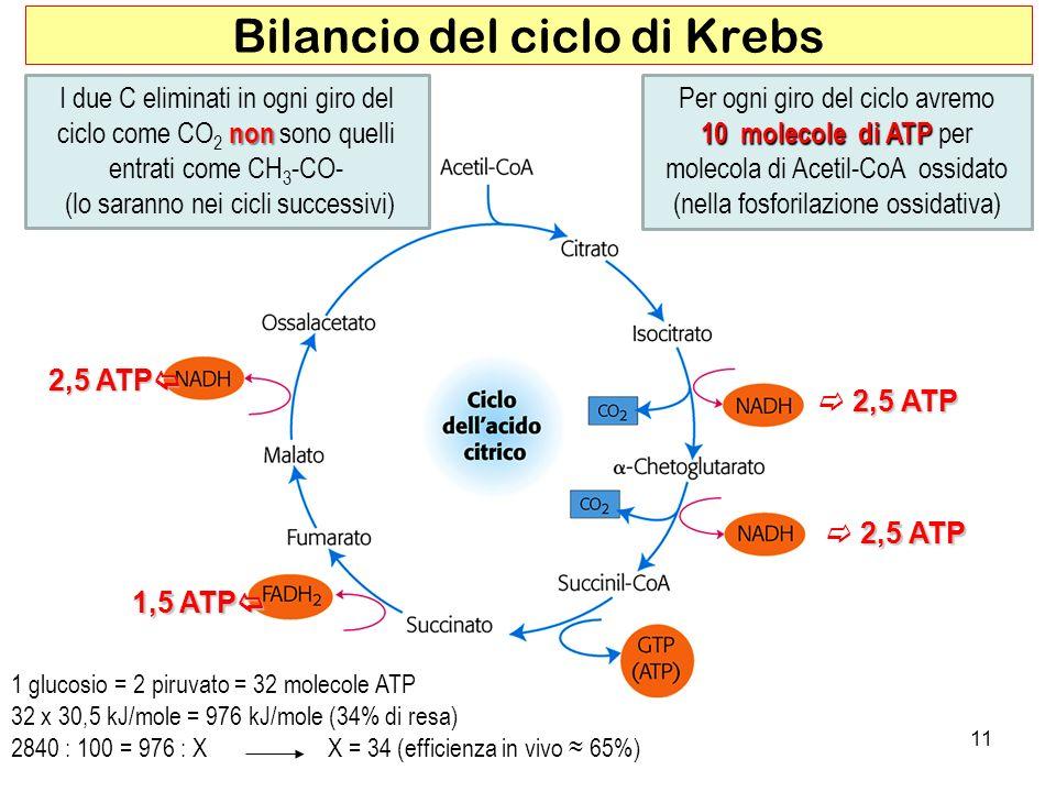 2,5 ATP 2,5 ATP 2,5 ATP 1,5 ATP 1,5 ATP 11 Bilancio del ciclo di Krebs non I due C eliminati in ogni giro del ciclo come CO 2 non sono quelli entrati