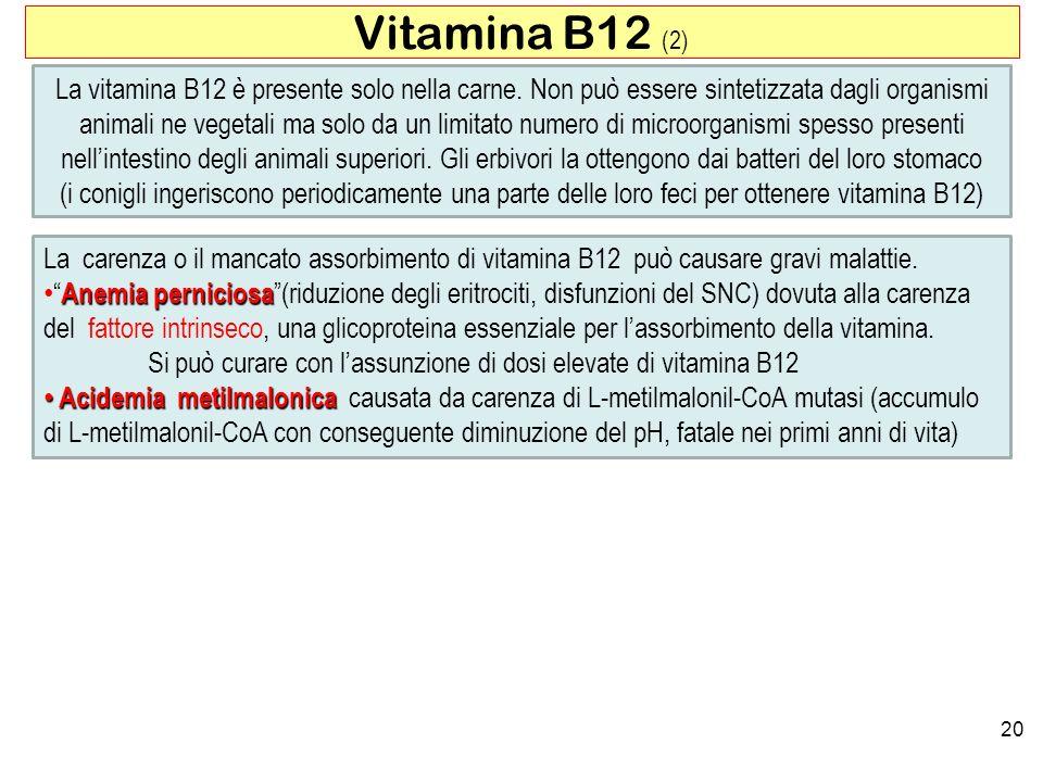 20 Vitamina B12 (2) La carenza o il mancato assorbimento di vitamina B12 può causare gravi malattie. Anemia perniciosaAnemia perniciosa(riduzione degl