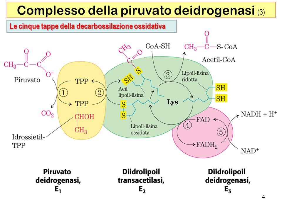 15 Ciclo del Gliossilato Presente nei semi delle piante in germinazione e in alcuni microorganismi.