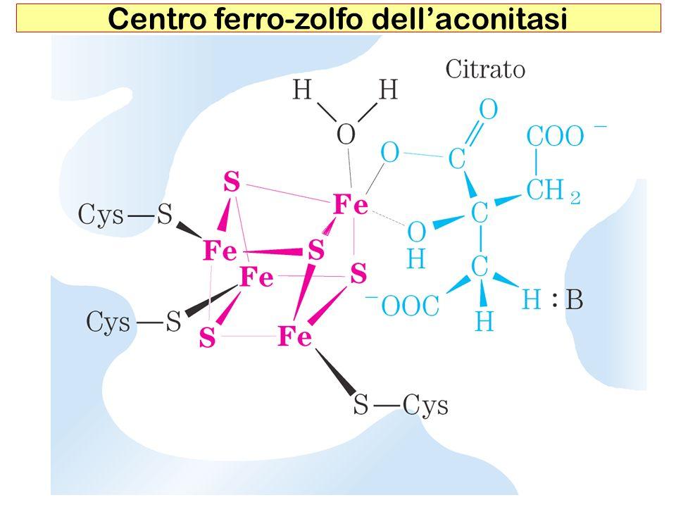 Meccanismo dazione dellisocitrato deidrogenasi