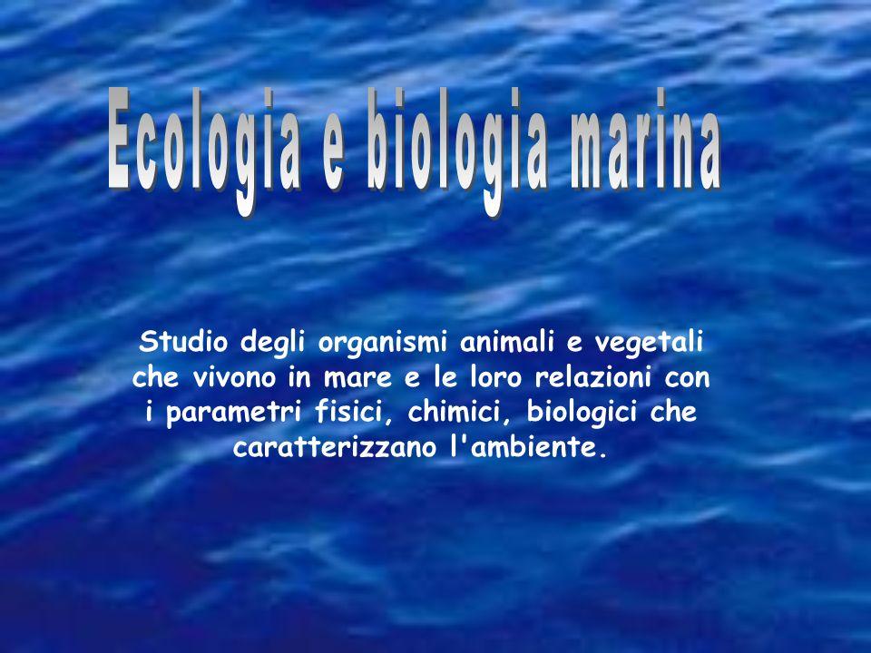 Perché è importante: il 70,8% della superficie terrestre è coperta dagli oceani, che rappresenta il 97% dellacqua totale.