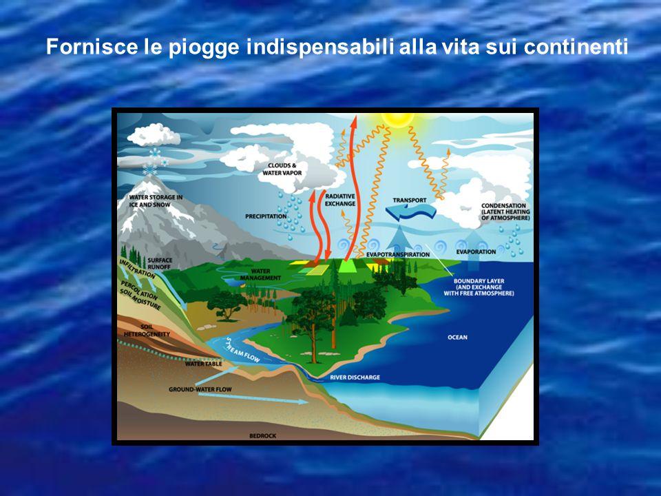 LOceano Indiano Oceano dei tropici, 18% degli Oceani Si è formato 120 Ma, quando lIndia, lAustralia e lAntartide si sono separate dallAfrica Si ingrandisce di qualche cm lanno Ospita flora e fauna adattati a climi caldi